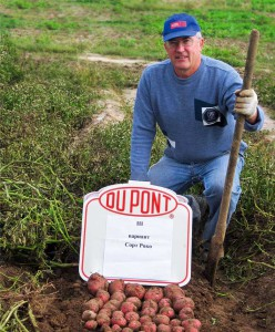Руководитель фермерского хозяйства Н.В.Ягудин участвует в оценке урожая